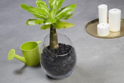 Paillage Organique Coloré Noir - Pot