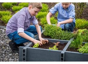 Carré Potager Garden Box Ecolat - Ambiance