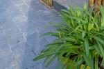 Pavé d'Ardoise Clivée - plante