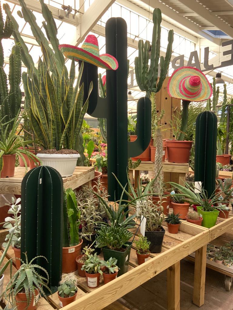 Cactus en jardinerie